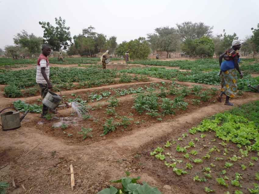 L'eau du puits permet l'arrosage des plans de légumes.